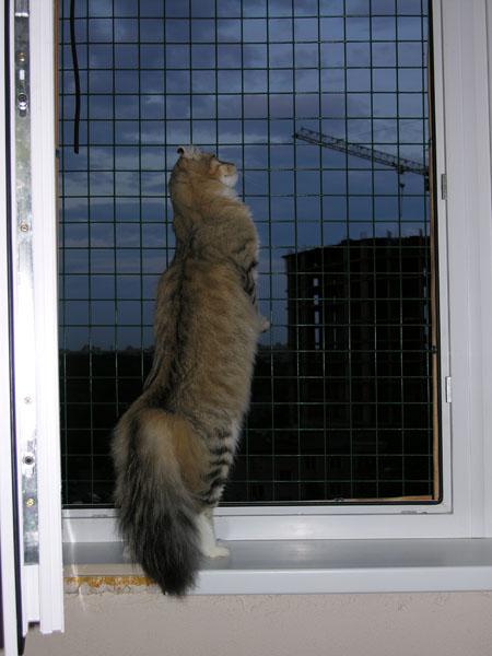 Сетка для окна своими руками